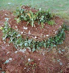 I modelli naturali in permacultura