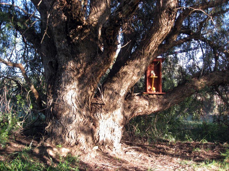 Casa degli Spiriti Euclipto permacultura