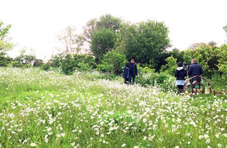 fiori selvatici maddy harland