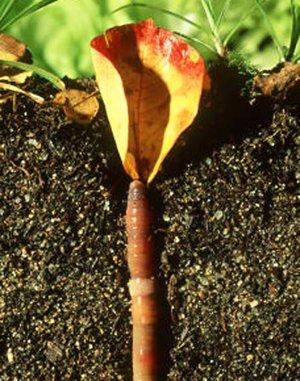 lombrichi rete permacultura suolo