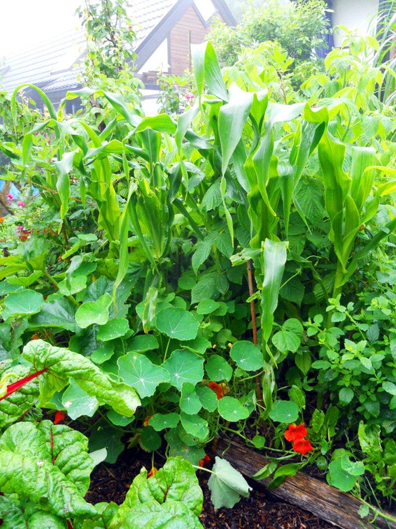 gilda di piante permacultura