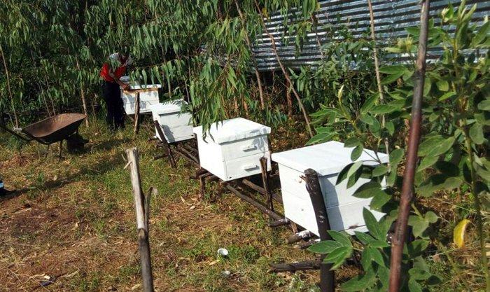 apicoltura permacultura kenya