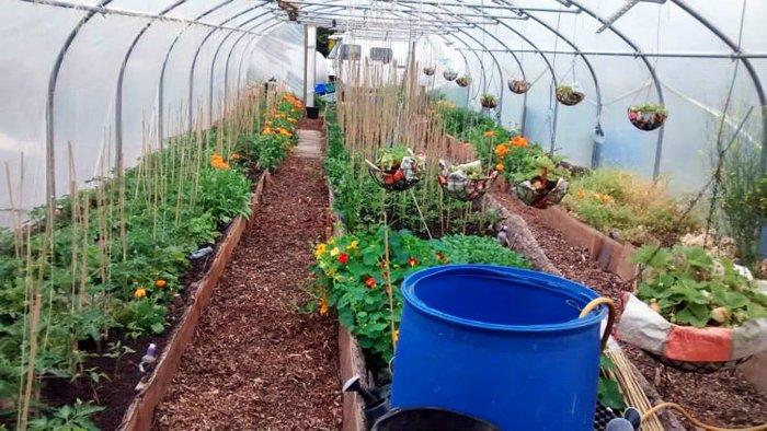 polytunnel autoirrigazione permacultura