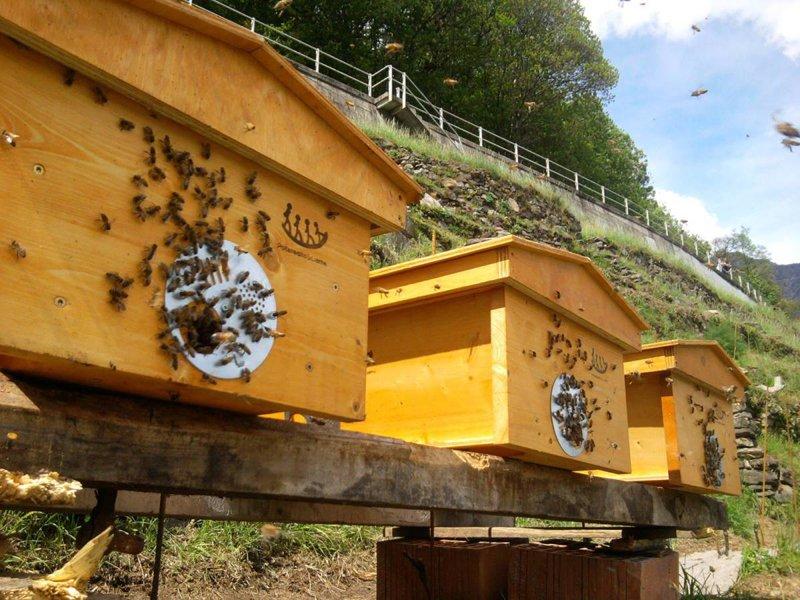 arnie api topbar permacultura