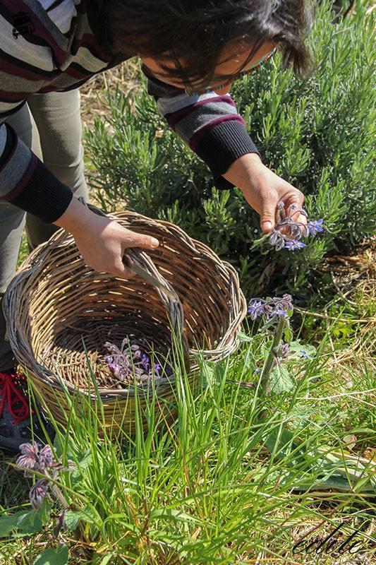 Lucia Buscema permacultura sicilia