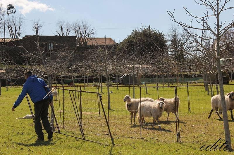 animali permacultura sicilia