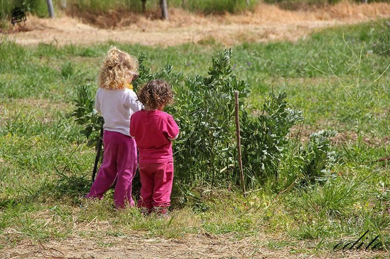 asilo bosco coccode bronte