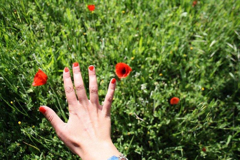 papavero petali permacultura