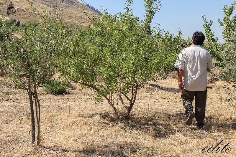 permacultura sicilia Mario Carbone
